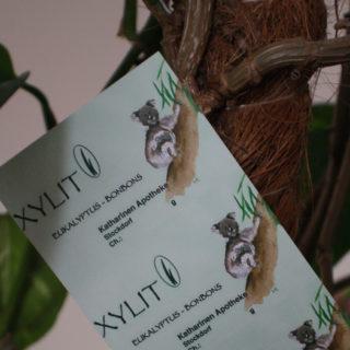 Xylit Bonbon Eukalyptus 2